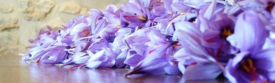 contact mozaffari saffron
